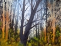 landschap bomen 1